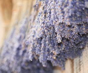 lavender-570570_640